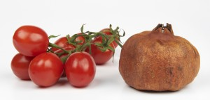 melograno e pomodori