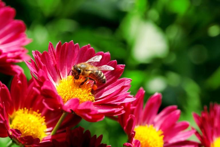 Les extraits de pollens de fleurs au service de la prostate