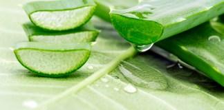 Aloe vera : 10 bienfaits pour votre santé