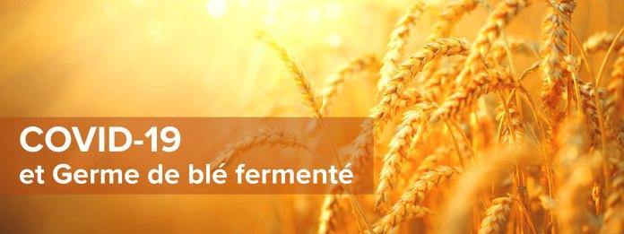 COVID-19 et Germe de blé fermenté