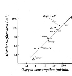 indeed among species lung surface area is not directly proportional to bw or lung volume rather it is proportional to the vo2 of the species fig 16  [ 1800 x 1668 Pixel ]