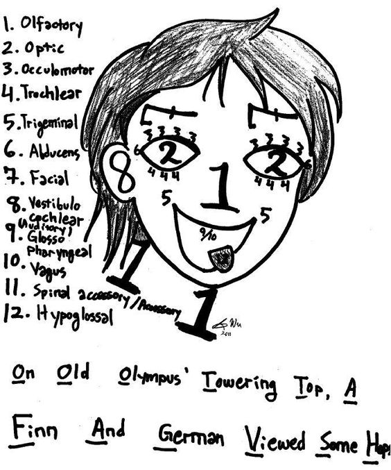 Cranial Nerves Mnemonics [Clean, Dirty & Easy-to-Remember]
