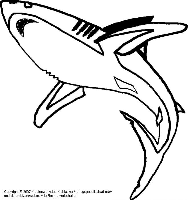 Hai - Medienwerkstatt-Wissen © 2006-2021 Medienwerkstatt