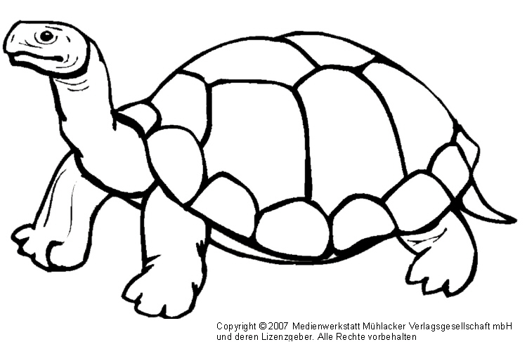 Schildkröte - Medienwerkstatt-Wissen © 2006-2017