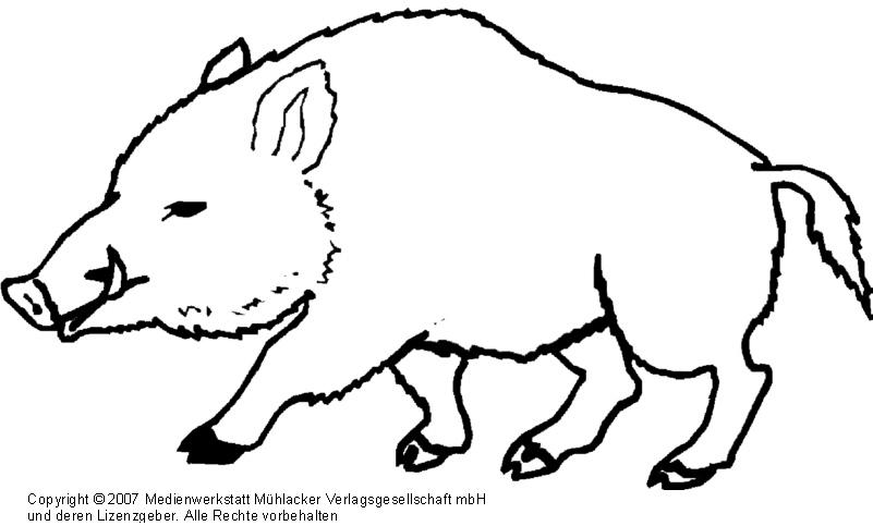 Wildschwein - Medienwerkstatt-Wissen © 2006-2017