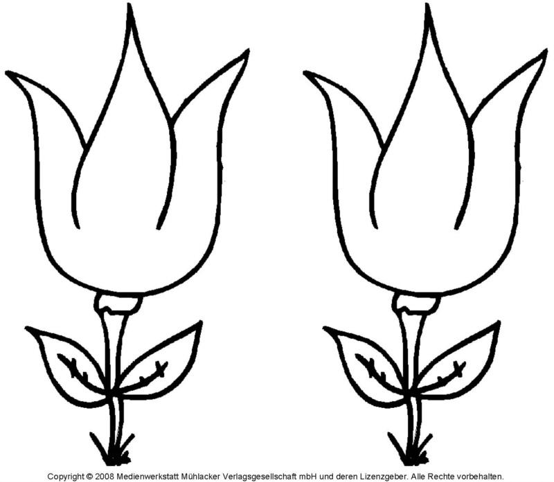 Ausmalbild - Tulpe 2 - Medienwerkstatt-Wissen © 2006-2021