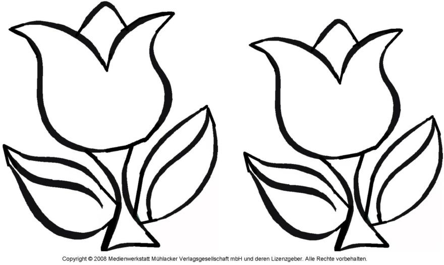 Ausmalbild - Tulpe 4 - Medienwerkstatt-Wissen © 2006-2017