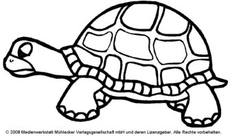 Schildkrötenfamilie   Medienwerkstatt Wissen © 2006 2021 ...