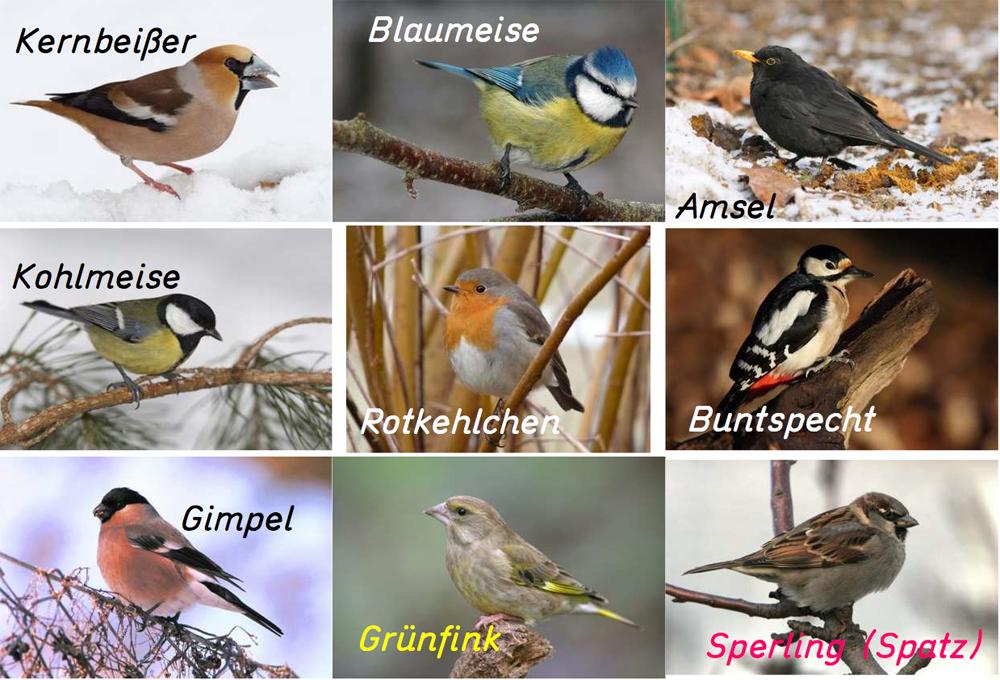 Die bekanntesten Wintervögel am Futterhaus