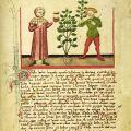 Magiferous Plants in Medieval English Herbalism