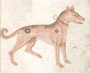 medieval pet names - Medieval illumination of a dog, 14th century, from a Codex in the Czech Republic