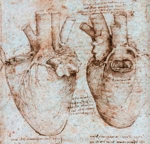 leonardo da vinci - anatomical human heart