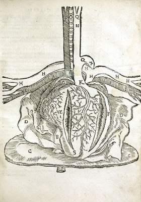 Dissection of Heart, from Mondino Dei Luzzi's Anatomia Mundini, Ad Vetustis, 1541