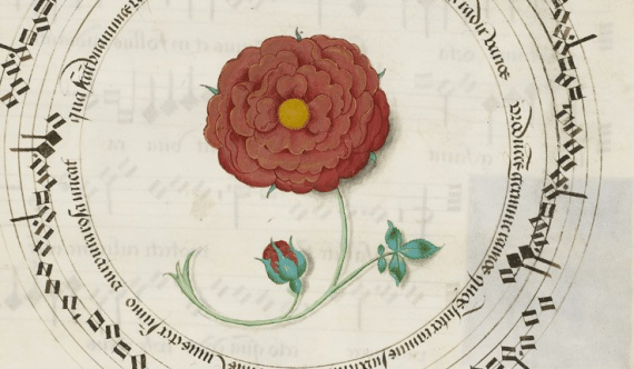 16th century Red Rose - from British Library MS Royal 11 E XI