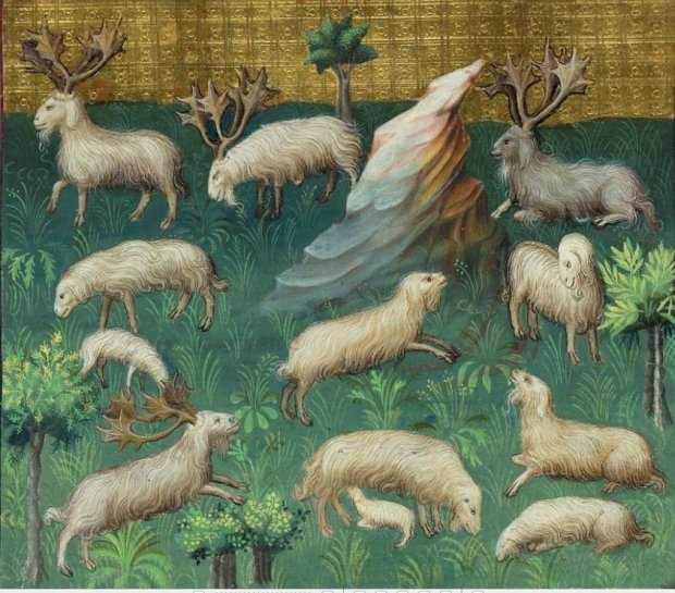 Medieval hunt - images of sheep