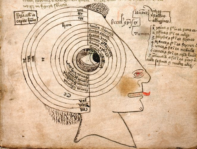Detail Of A Diagram Of The Seven Tunics And Three Humours Of The Eye And The Skull  Labelled For