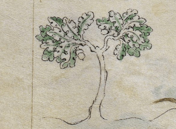 Trees in the Middle Ages