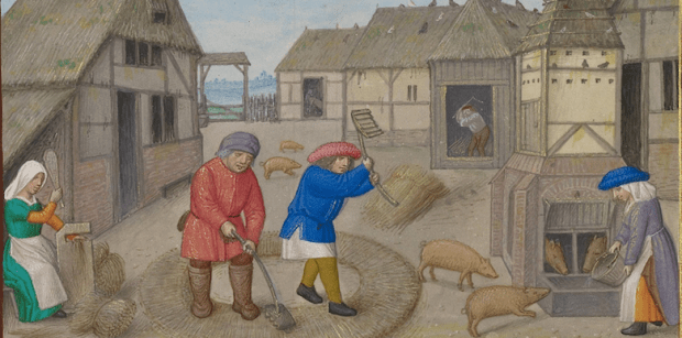 feeding pigs - Workshop of the Master of James IV of Scotland