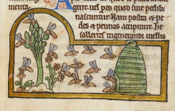 medieval bees - British Library Royal 12 C XIX   f. 45