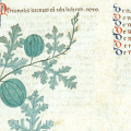 Medieval iconography of watermelons in Mediterranean Europe