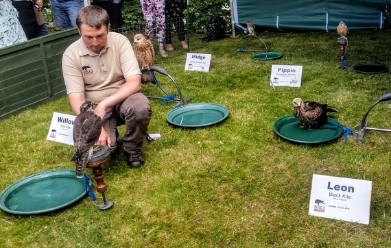 Falconry demonstration at IMC Leeds 2015. Photo by Medievalists.net