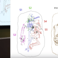 Art as data: Studying corpses by drawing them