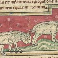 Nasty, Brutish and Short: The Lives of Cattle and Sheep in Medieval Finland
