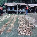 The Viking Great Army in England: new dates from the Repton charnel