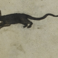 The archaeology of the Black Rat in Roman to Medieval Europe