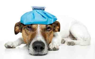 Protect Your Pet from the Flu: 4 Easy to Follow Tips