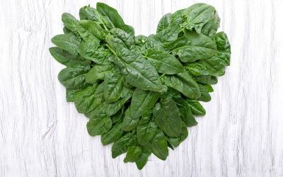 Scientists Managed to Grow Human Heart Tissue on Spinach Leaves