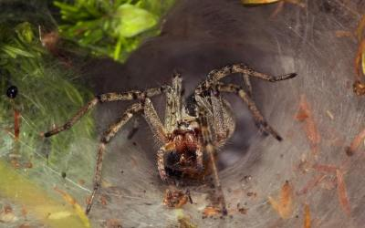 Spider Venom May Help Protect the Brain from Injury after a Stroke