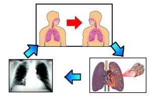 Gambar Penyakit TBC