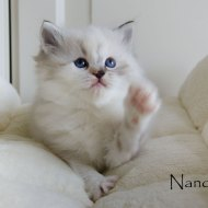 nanou_3
