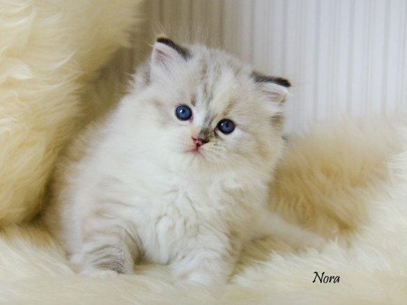 nora_12