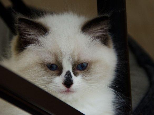 Olivia 8,5 veckor