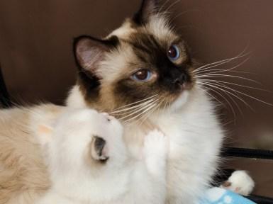 Cami & Vanilla