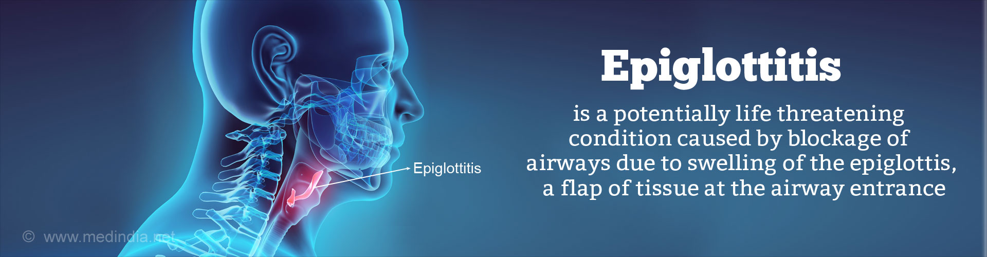 Epiglottis Function And Structure