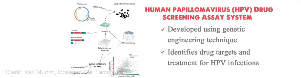 medium resolution of new screening system to identify potential drug targets and treatment for human papillomavirus hpv