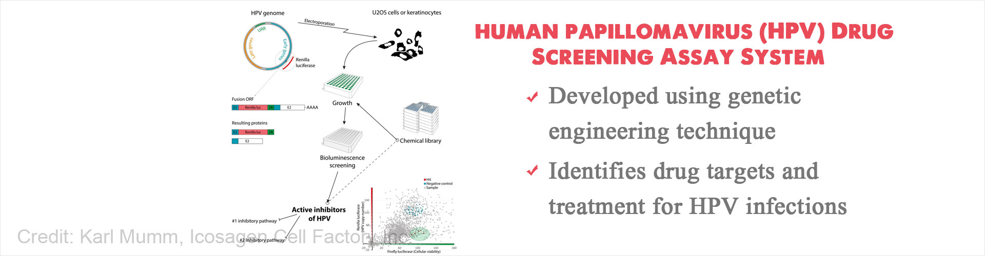 hight resolution of new screening system to identify potential drug targets and treatment for human papillomavirus hpv
