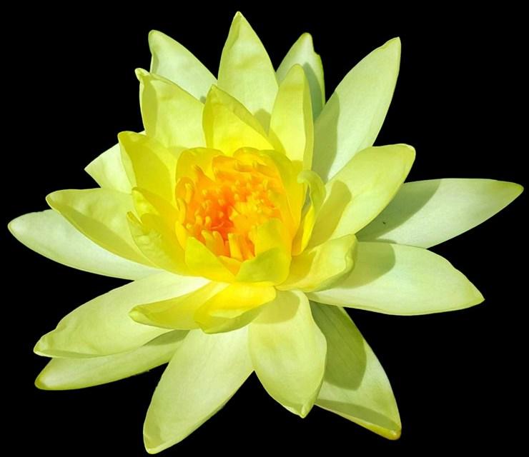 Il fenomeno mindfulness – Lama Jampa Gyatso