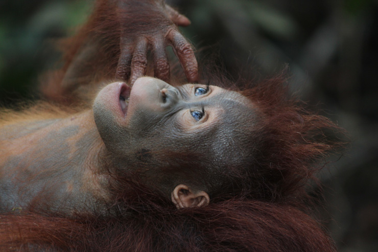 Il Fenomeno della centesima scimmia