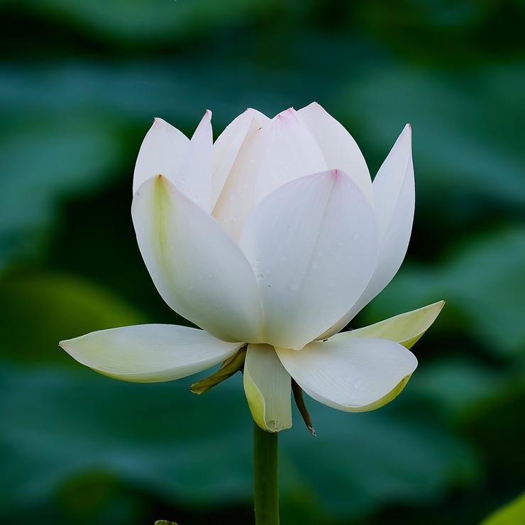 Risultati immagini per La fioritura della consapevolezza