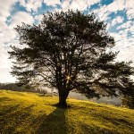 טיול בפארק ומדיטציה עם עץ