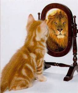 cat lion in mirror