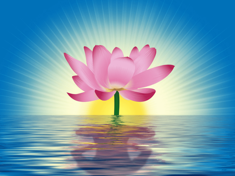 The Meaning Of The Lotus Flower