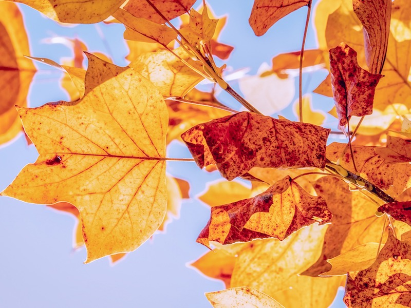 5 Simple Ways to Reduce Stress in Autumn