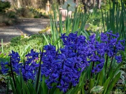 weird-purple-flowers