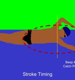 freestyle stroke diagram [ 1280 x 800 Pixel ]