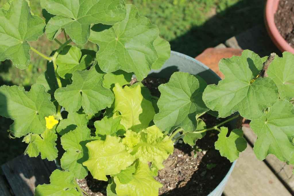 potted deck plants